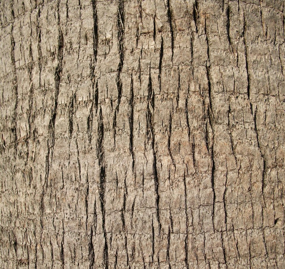 English:    Image title: A close up shot of a palm tree trunk texture Image from Public domain images website, http://www.public-domain-image.com/full-image/textures-and-patterns-public-domain-images-pictures/tree-bark-cortex-public-domain-images-picture