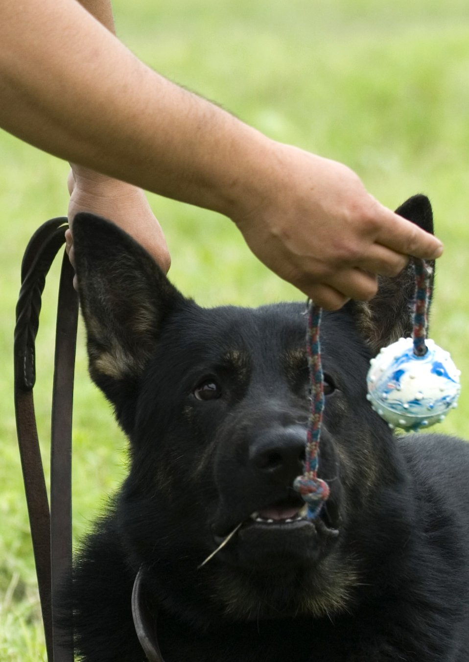 Instructors' barking orders understood at canine boot camp