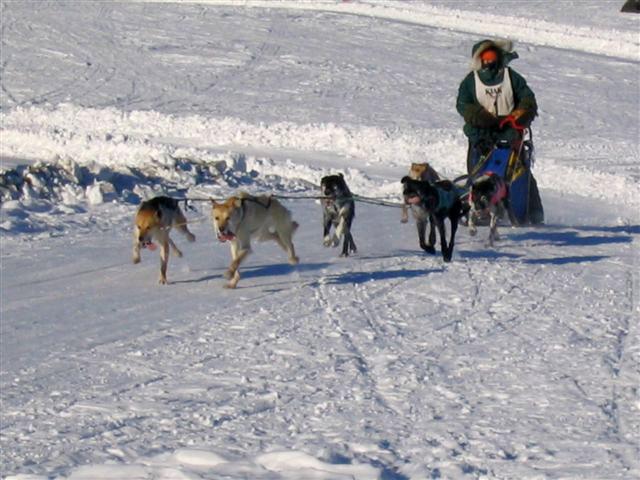 Eielson Airmen help keep mushers, dogs in race