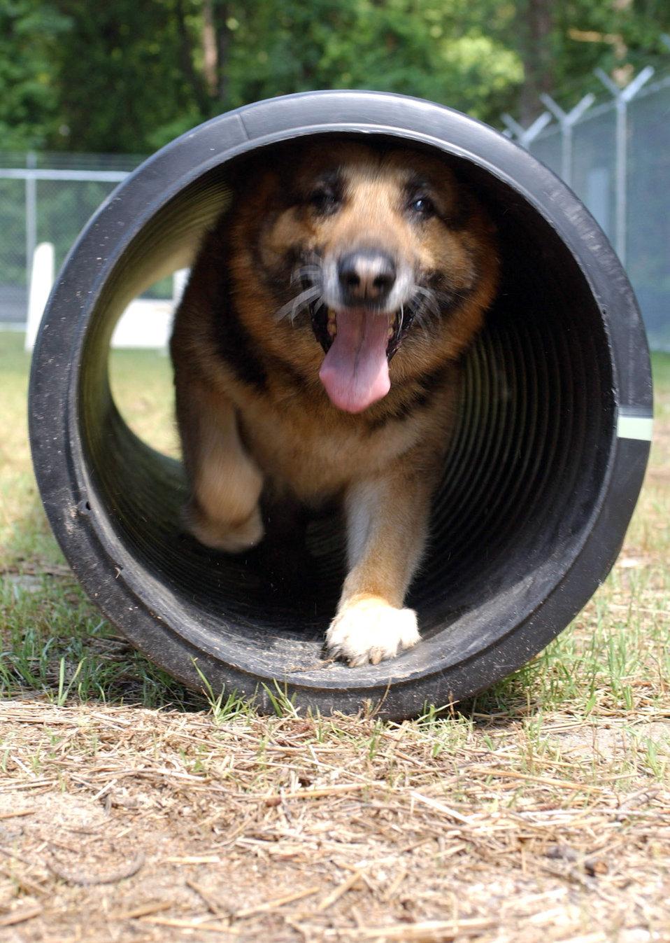 Military working dog Eiko