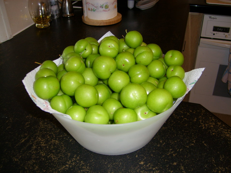 A bowl of wild green plums variously called ganerik, 'Can Eric' or Ganarek, from my garden. It is to depict this special fruit grown in Bdadoun, Lebanon.