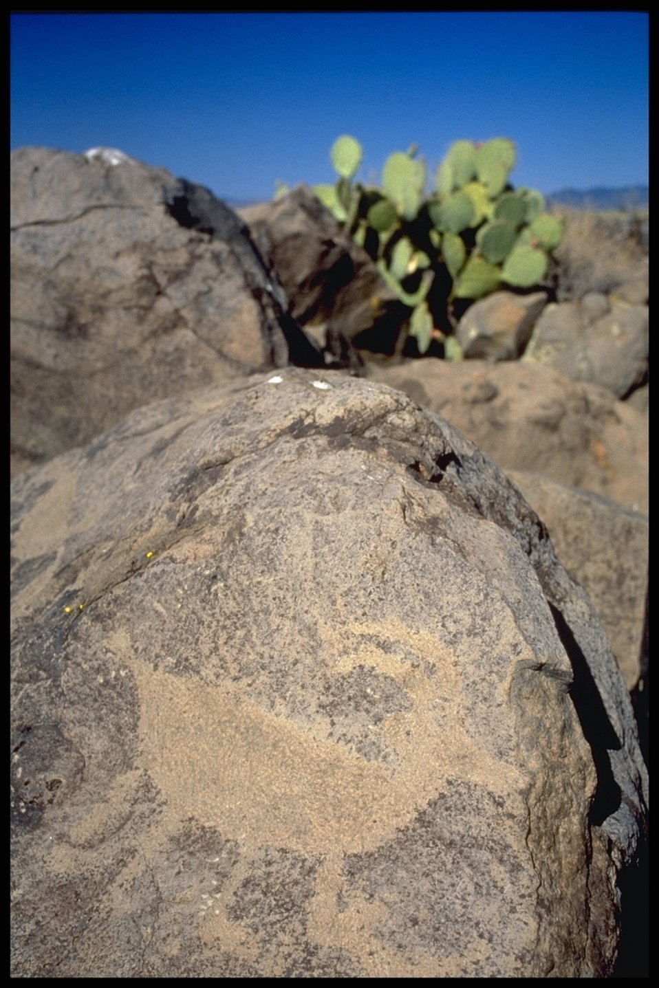 A Petroglyph (rock art) in the Agua Fria National Monument and a Prickly Pear Cactus in the background.
