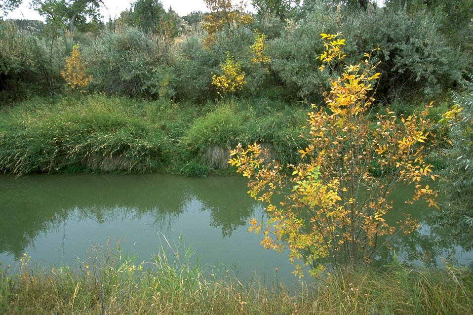Tree turning to autumn colors along the bank of the Yellowtone River channel at Howrey Island Nature Trail