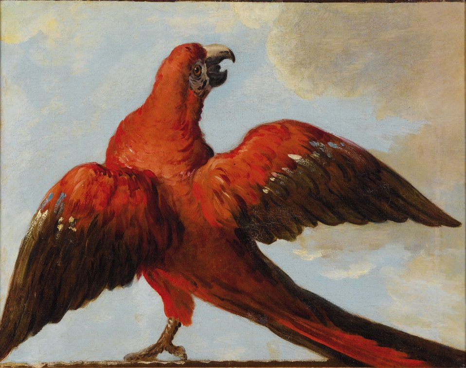 'Parrot with Open Wings', attributed to Jean-Baptiste Oudry.jpg