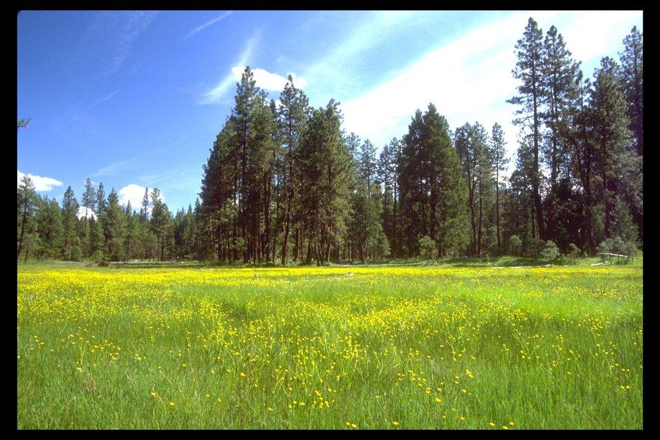 A wet meadow along Rancheria Road east of Butte Falls.