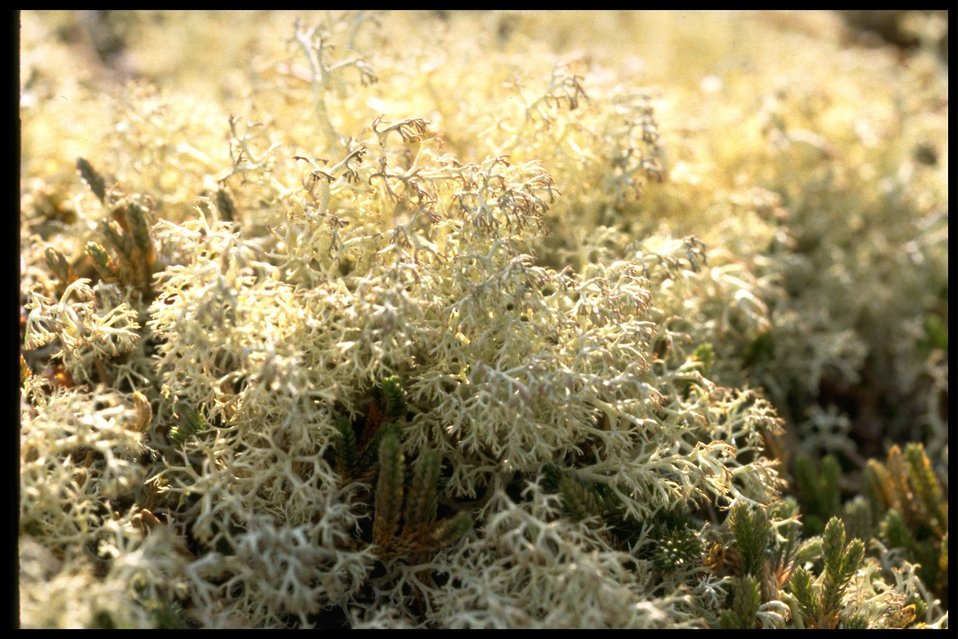 Close up of Lichen at Point Colville.