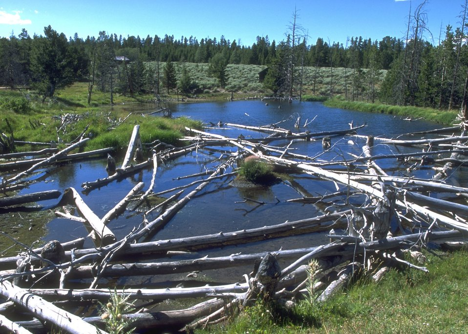 Beaver pond and structure at Miners Delight, Lander Field Office.