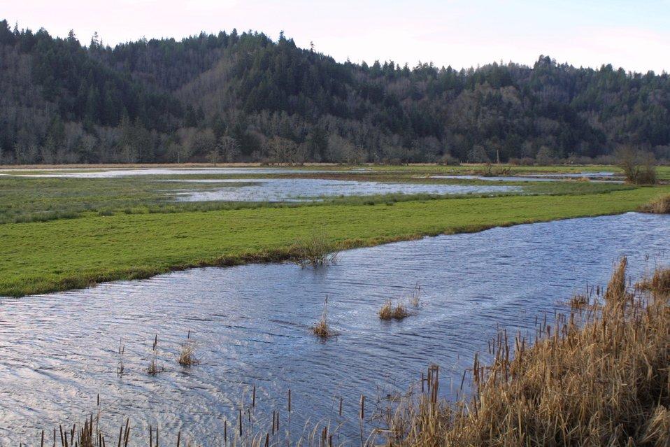 Wetlands at the Dean Creek Watchalbe Wildlife site near Reedsport, Oregon.