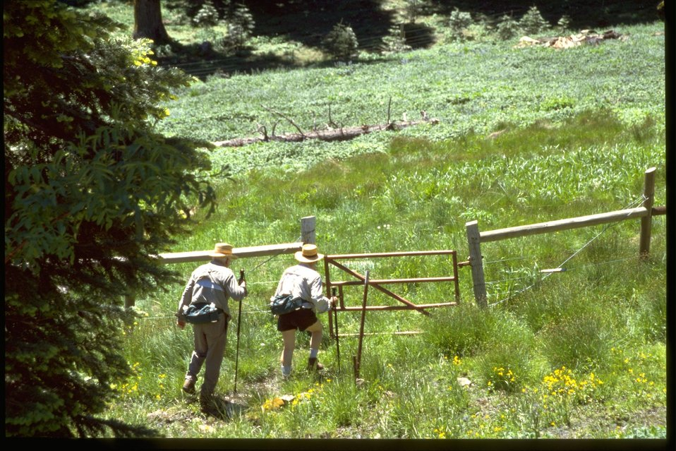 Hikers on the Pacific Crest Trail.