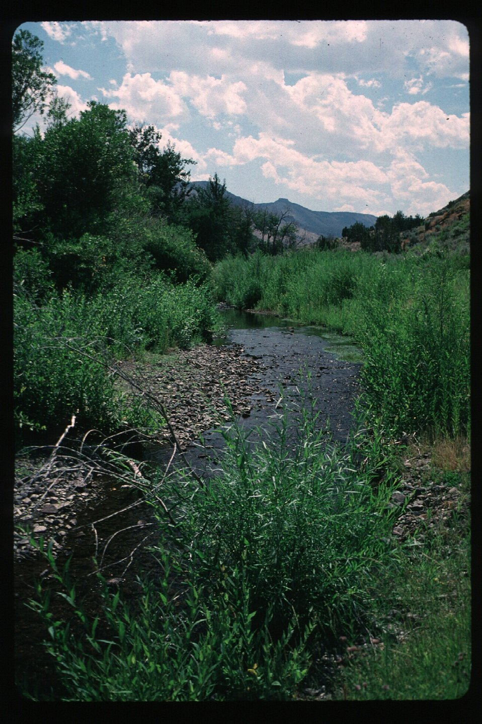 Big Cottonwood Creek  Recreation  Burley Field Office  USRD  Upper Snake River District