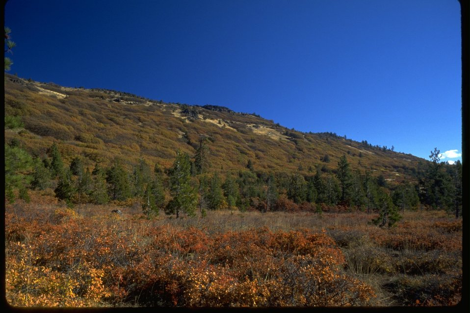 The southside bench of the Keene Creek Ridge.