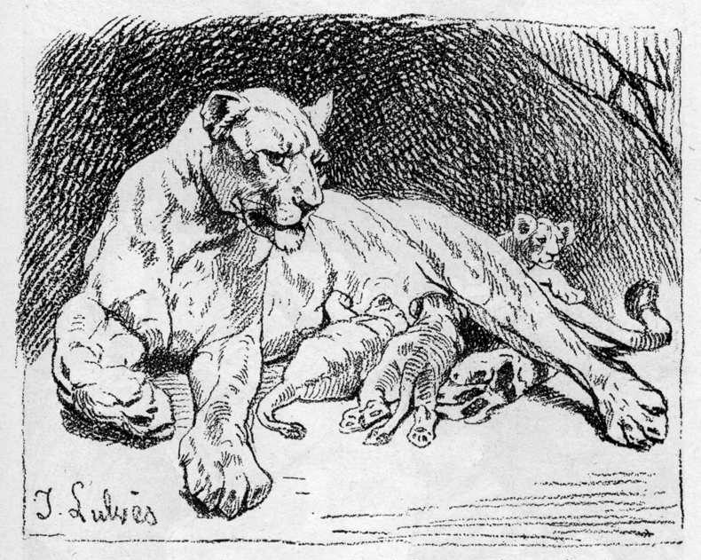 Löwin mit Jungen