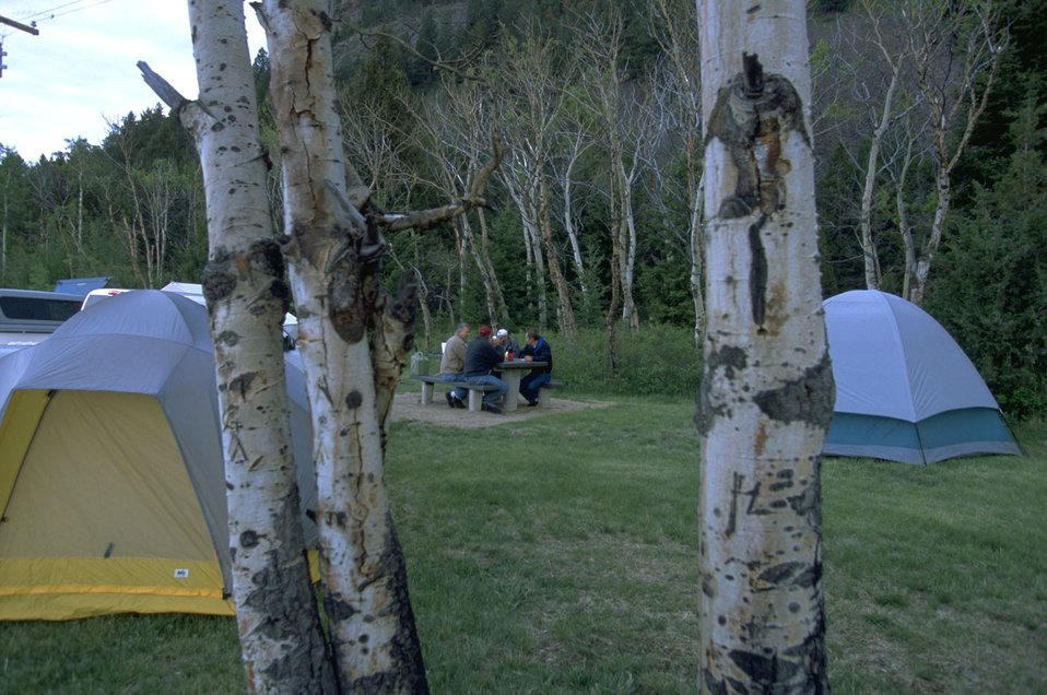 View of campers between birch trees at Divide Campground