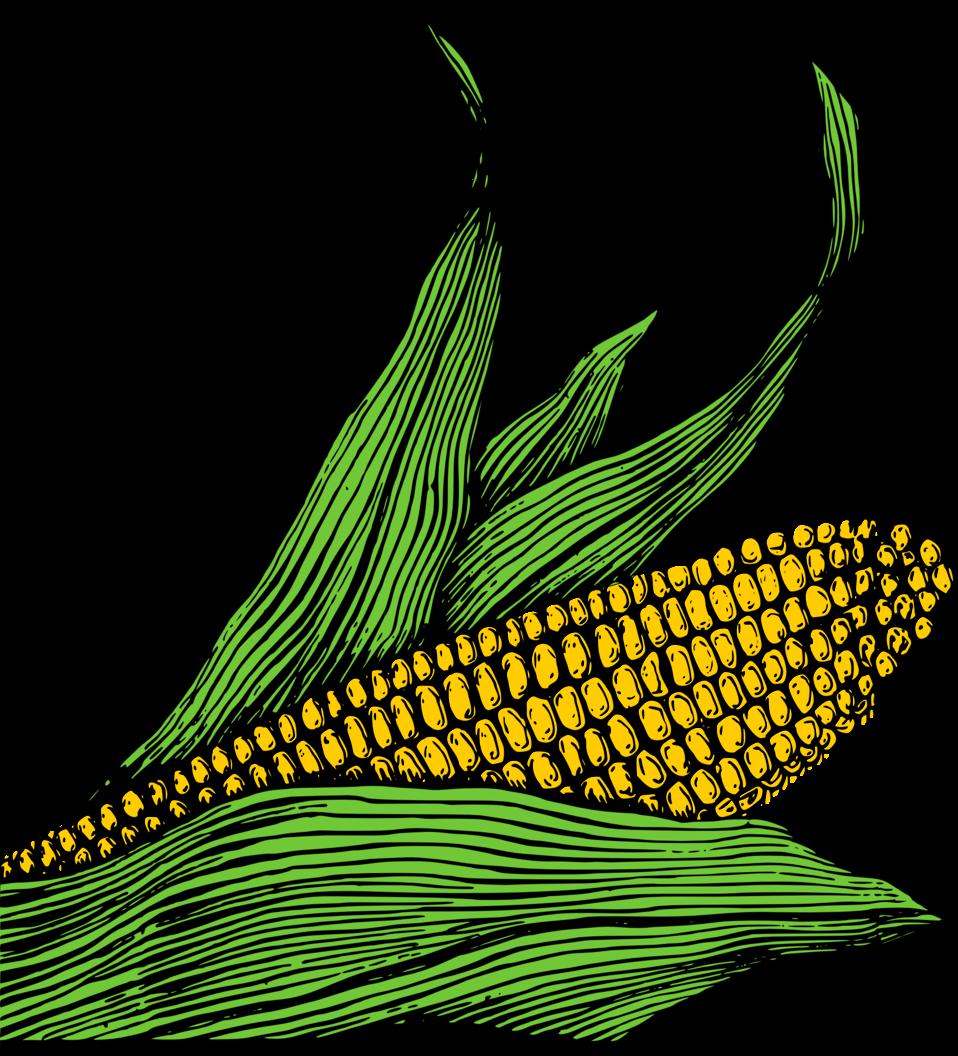 Corn on the Cob - Colour