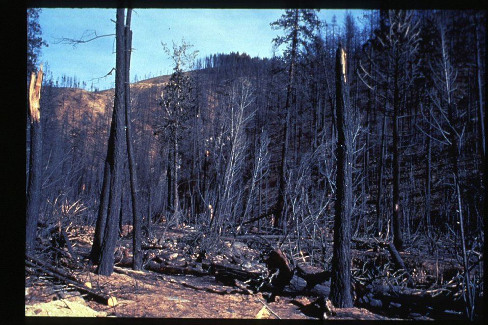 Boise Foothills Fire  Danskin Mountains and South Fork of Boise River  Burnt area  Four River Field Office  LSRD  Lower Snake River District