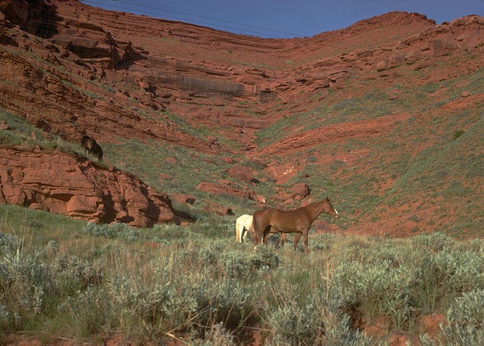 Wild horses near Red Canyon