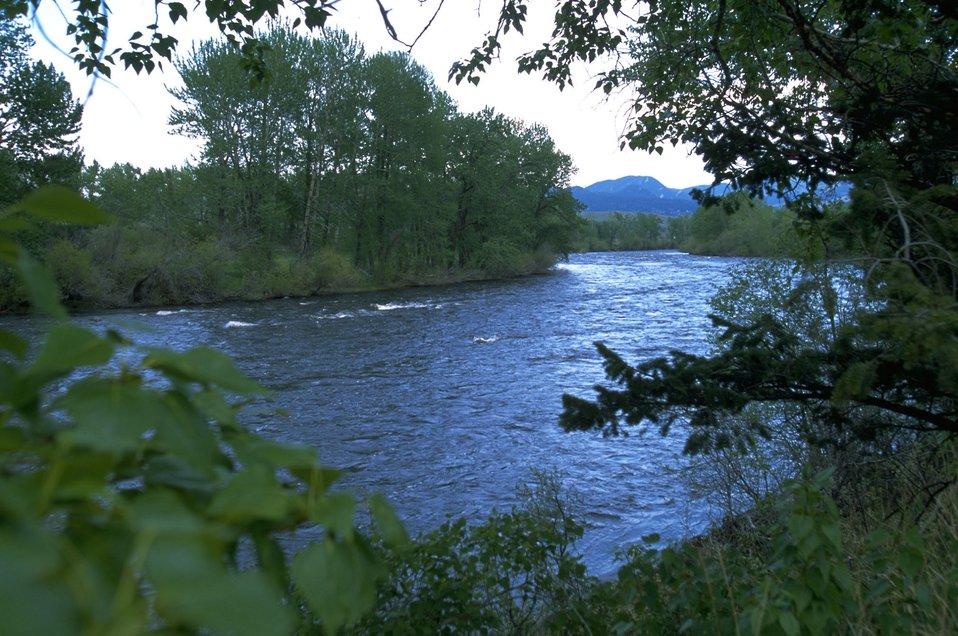 Big Hole River framed in greenery