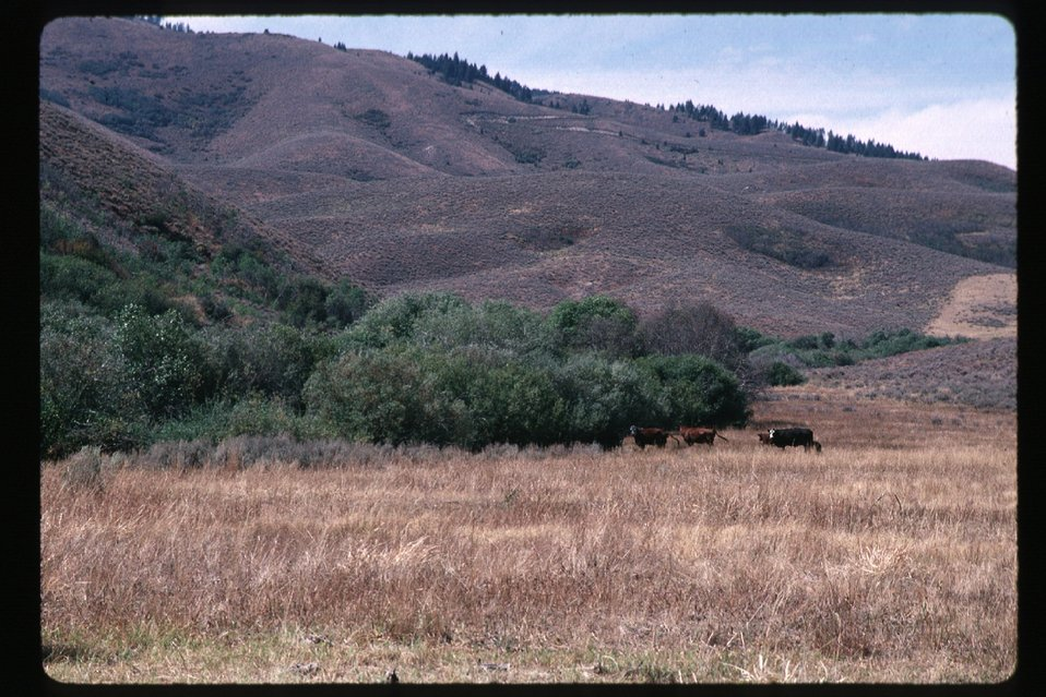Rangeland  Four Rivers Field Office  LSRD  Lower Snake River District