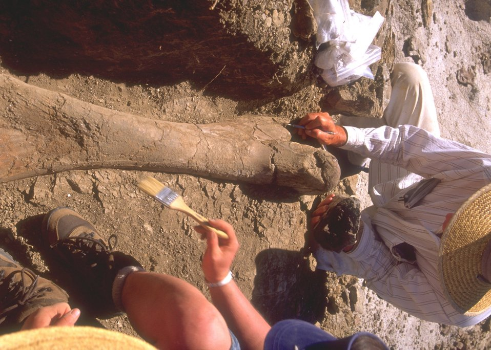Paleontologist working a dig for dinosaur bones, Lance Creek Fossil Area, Newcastle Field Office.
