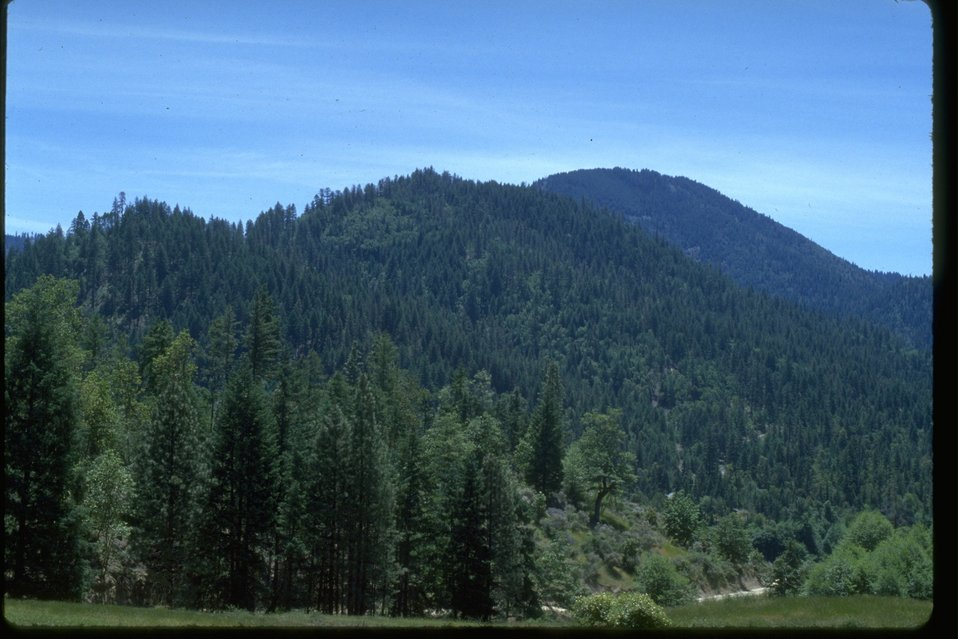 A timber treatment area around Thompson.