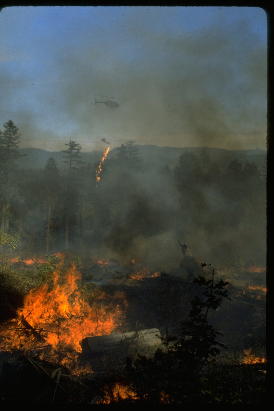 Heli-torching a prescribed fire.