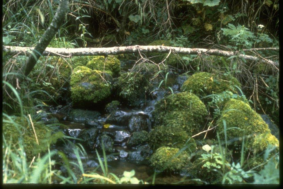 Mossy Rocks along a small creek.