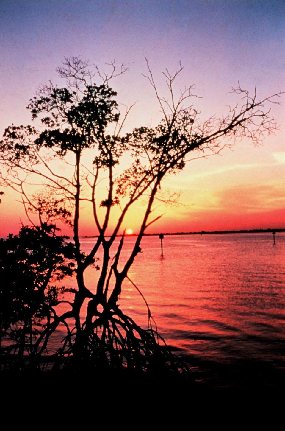 Mangrove sunset