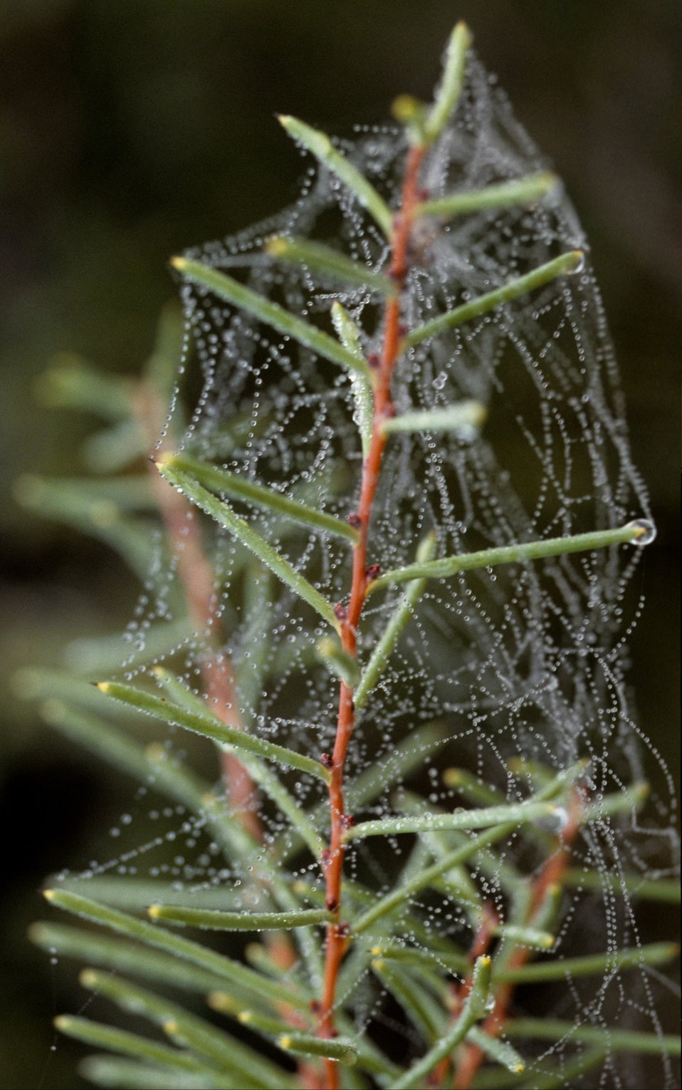 A dew-covered spider web.