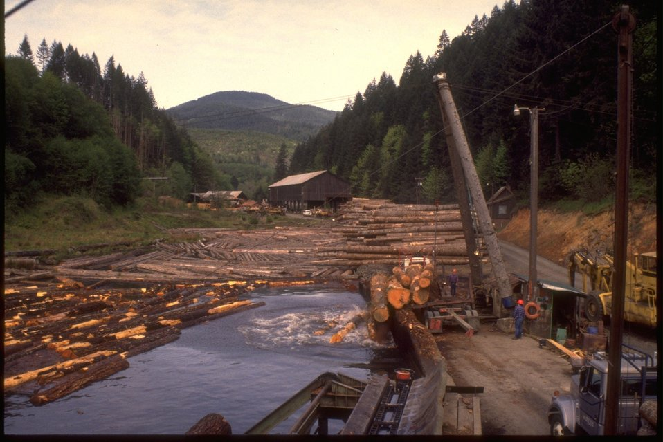 Logs being dumped into water for storage at the Hull Davis Lumber Mill.