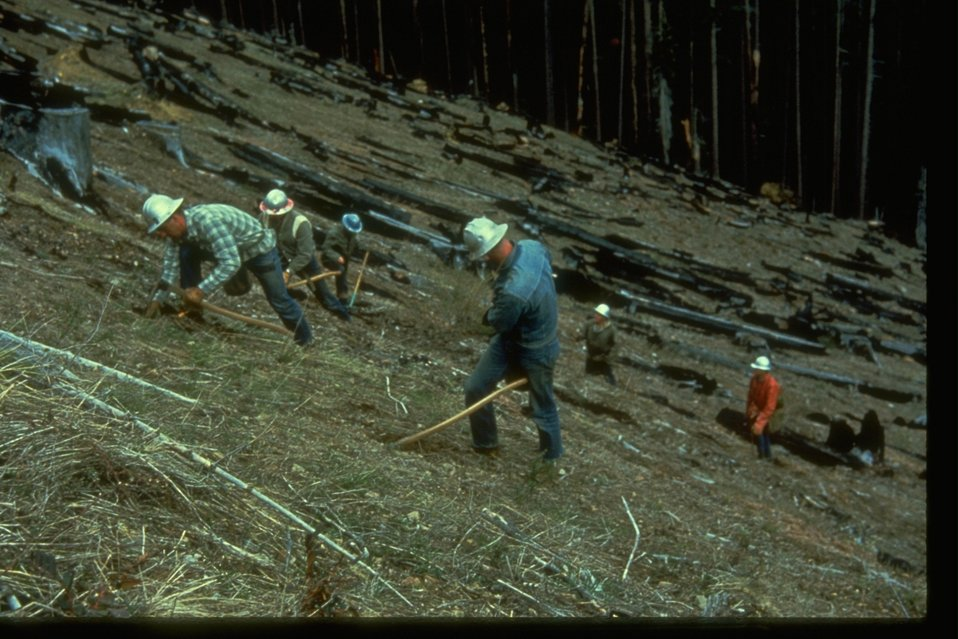 Field Workers plant trees.