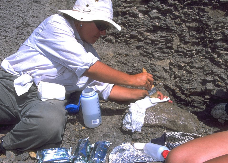 Paleontologist preparing a cast for a dinosaur bone, Lance Creek Fossil Area, Newcastle Field Office.