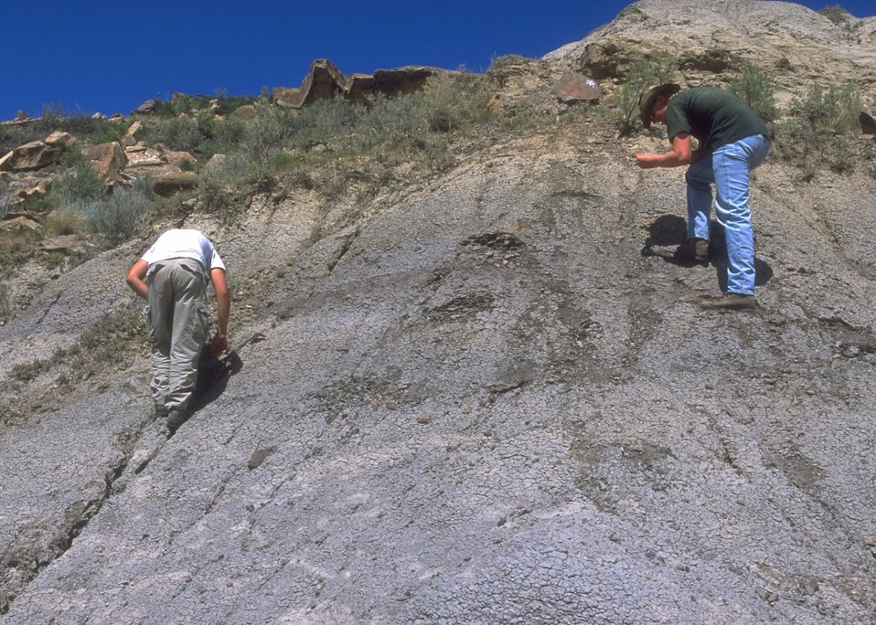 Paleontologists doing a survey for evidence of fossils, Lance Creek Fossil Area, Newcastle Field Office.