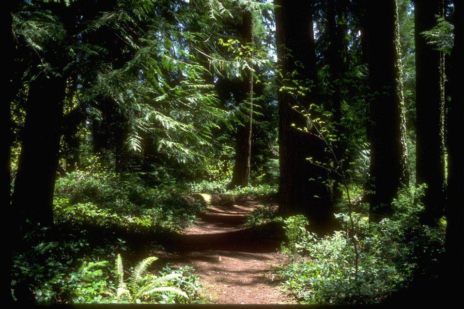 Old Growth Ridge Trail at Whitaker Creek.