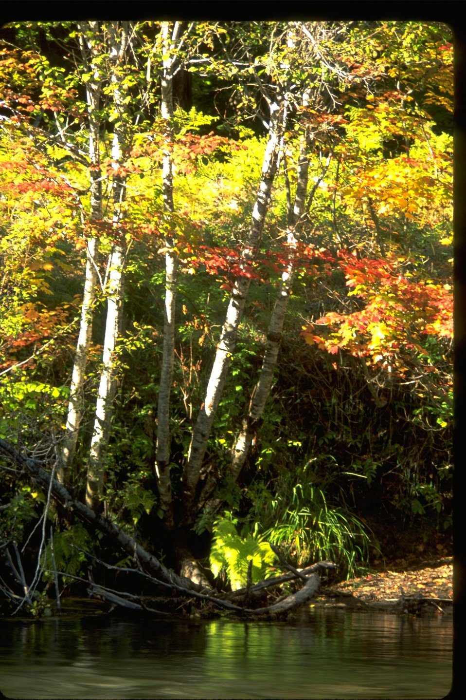 Upper Rogue River and the fall foliage.