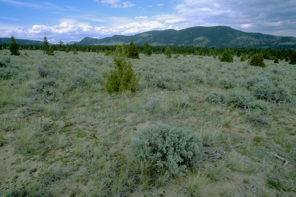 Sagebrush and vegetation with Hills in the background