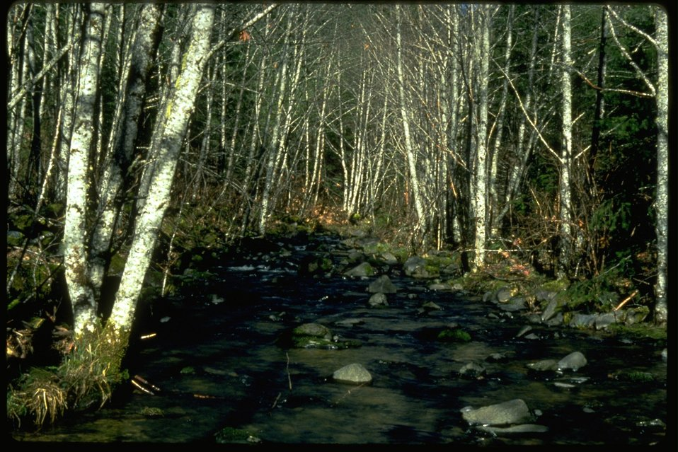 Riparian area on the West Fork of Elk Creek.