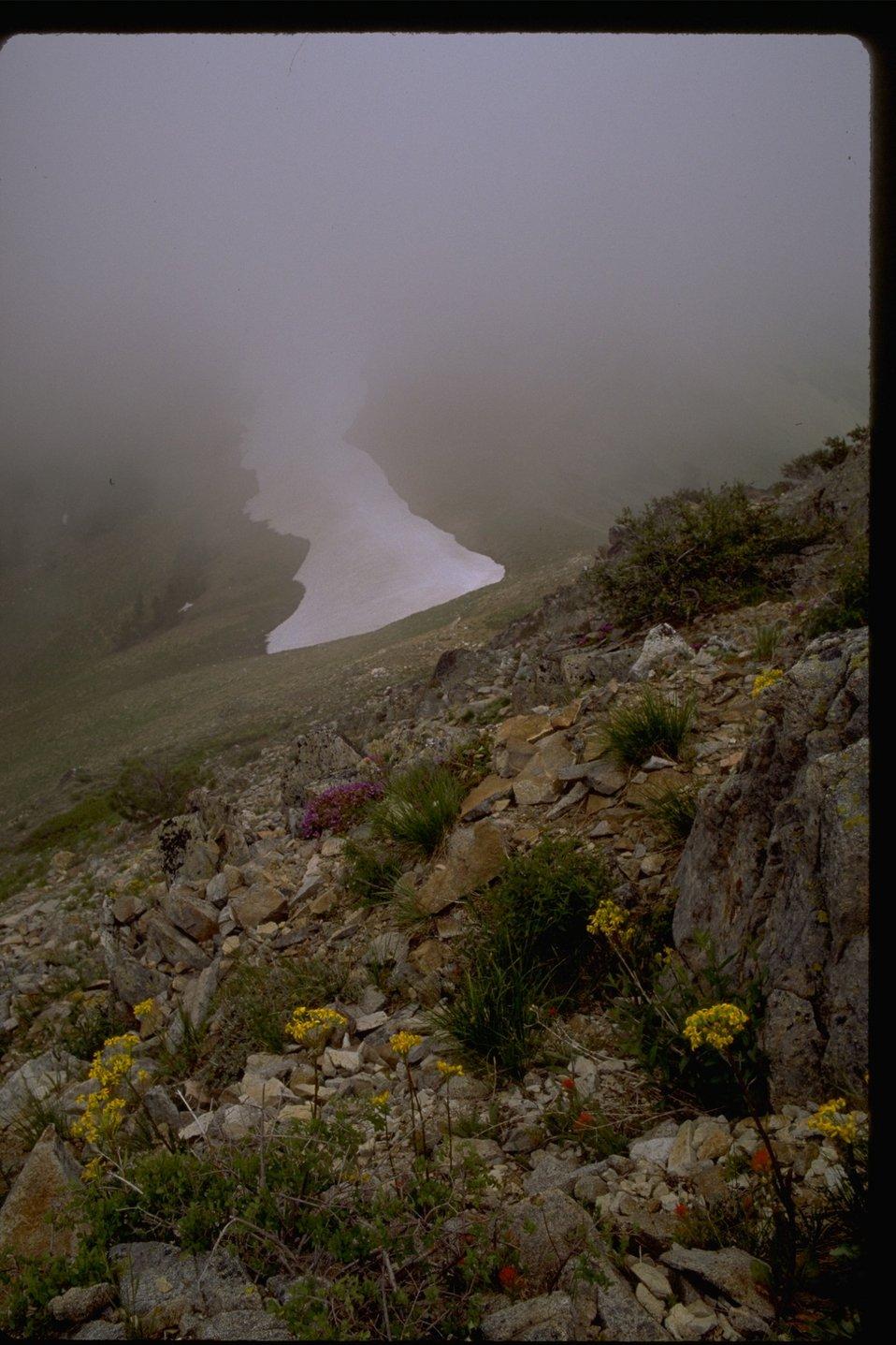 Flowers on a foggy day at Dutchman Peak.