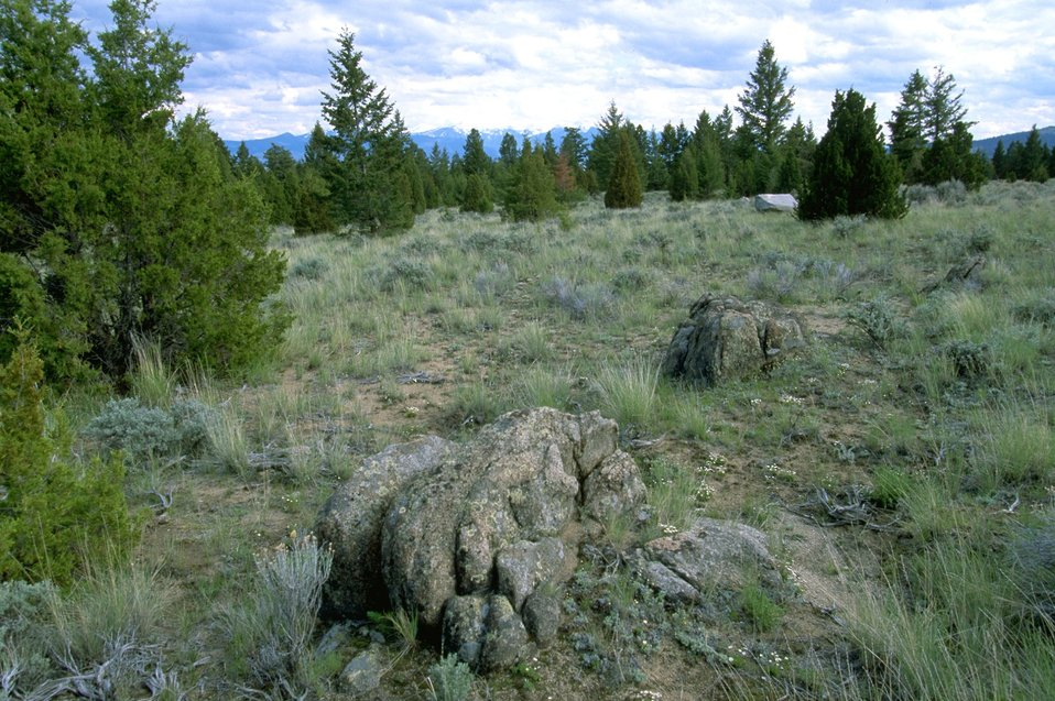 Large rocks and vegetation in the Pipestone Hills