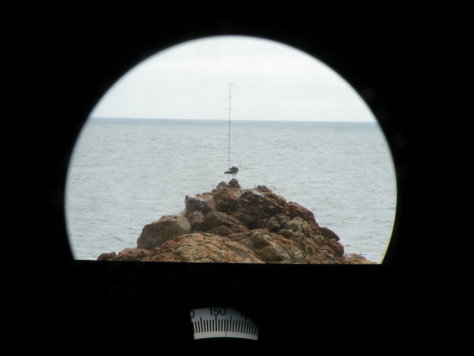 A California Gull seen through the big eye lens.  The angle to the horizon is visible on the bottom of the picture.  Using that angle and trigonometry, the distance to the object in the view finder can be calculated.