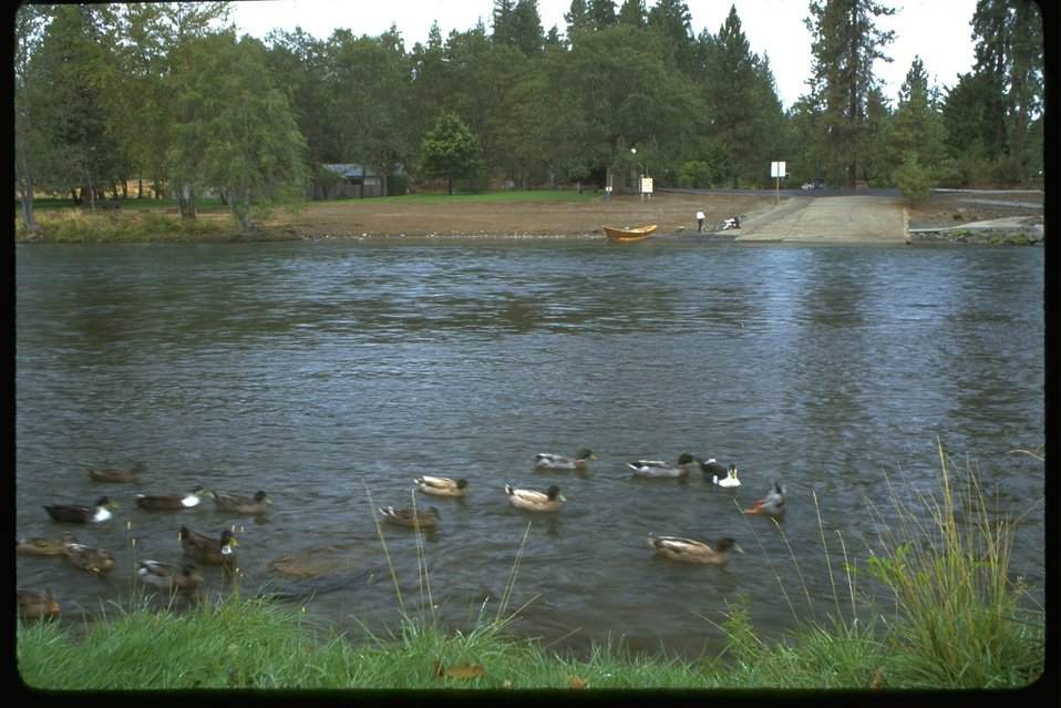 Drift boat sitting next to a boat ramp on the Rogue River.  Also, ducks in the foreground.