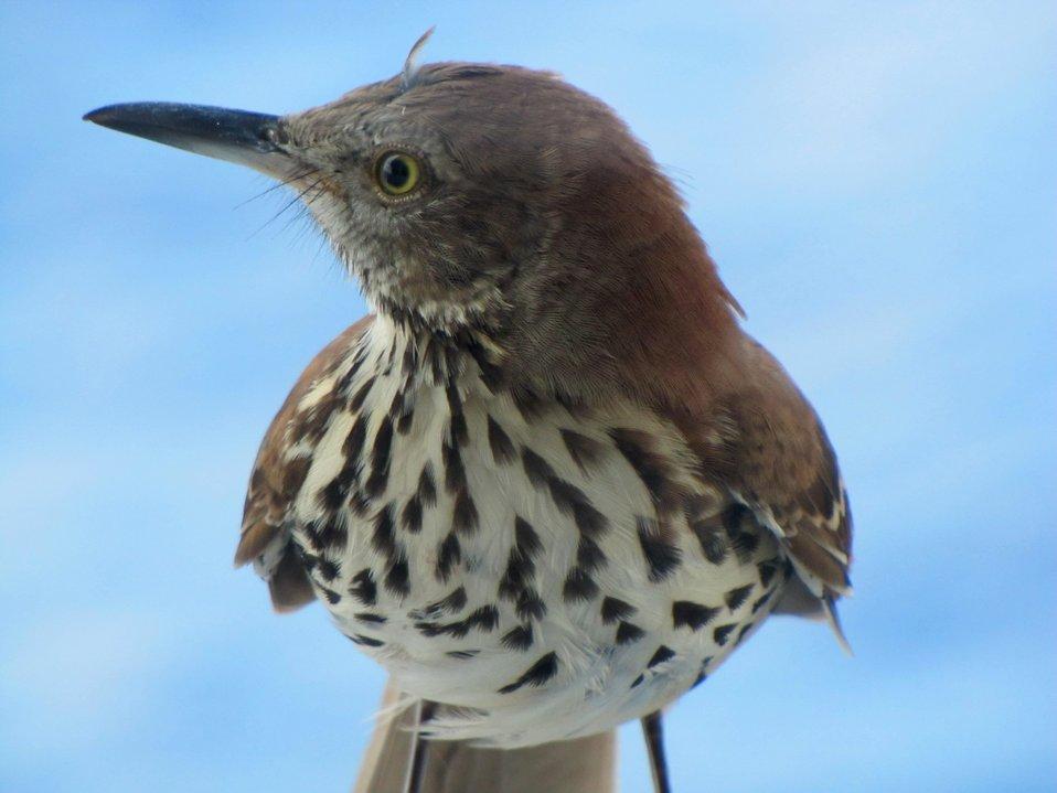 Shore bird landed on NOAA ShipPISCES.  Hopefully it found its way back to land safely.