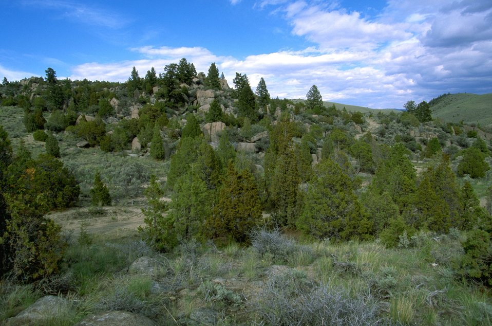 Rock formations and Junipers in the Pipestone Hills area