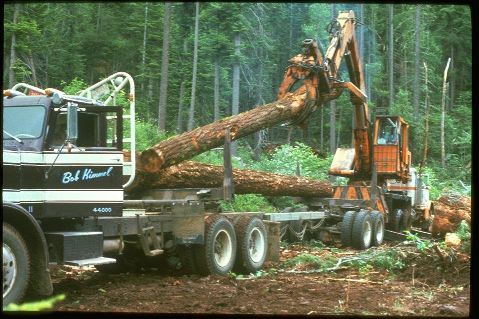 Loading log truck.