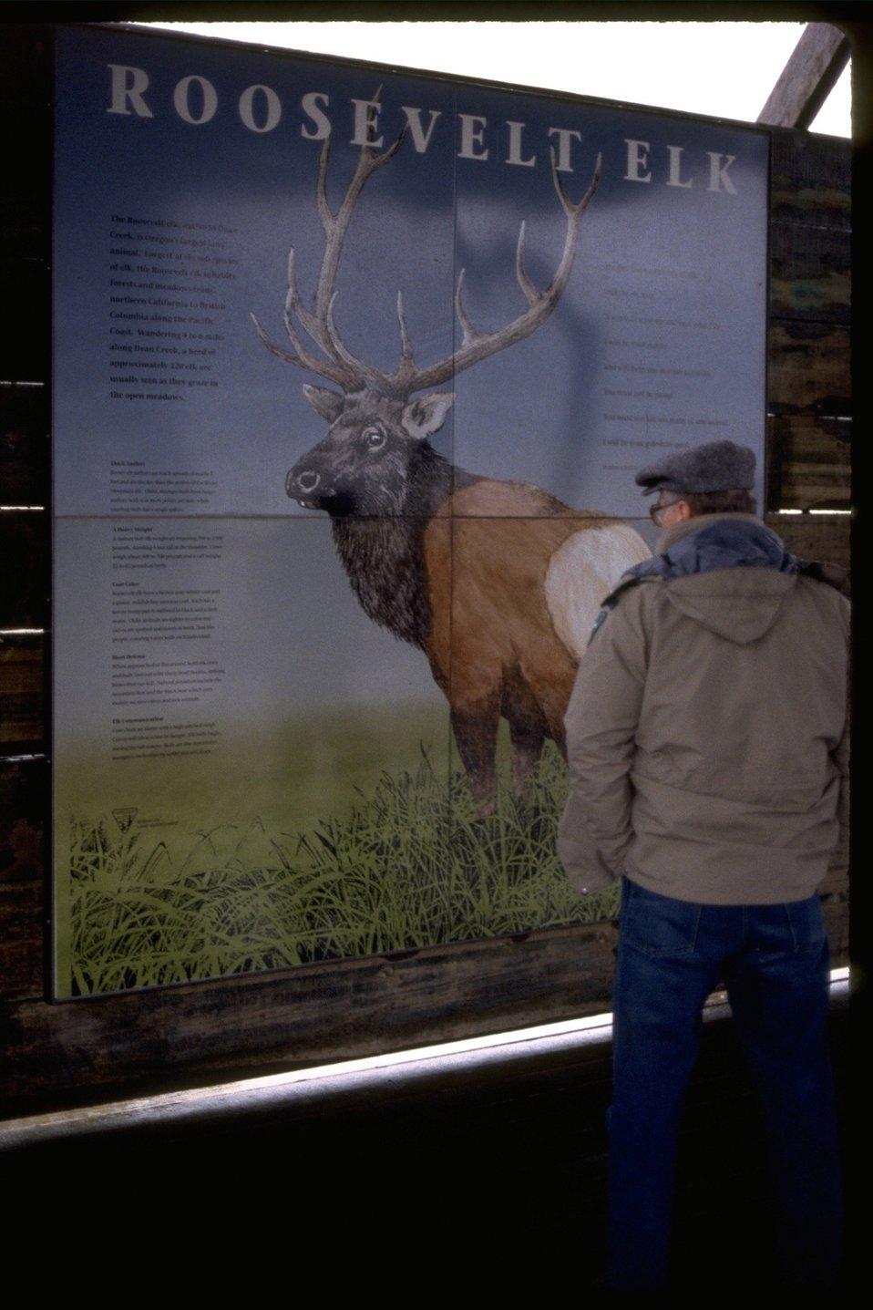 """Dean Creek Interpretive sign, reading """"Roosevelt Elk."""