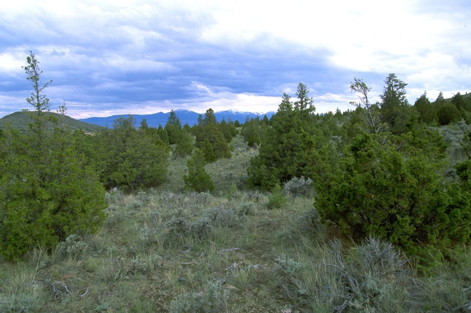 Sagebrush, mountains and trees