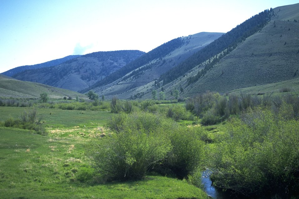 Grassy meadow and creek below mountains