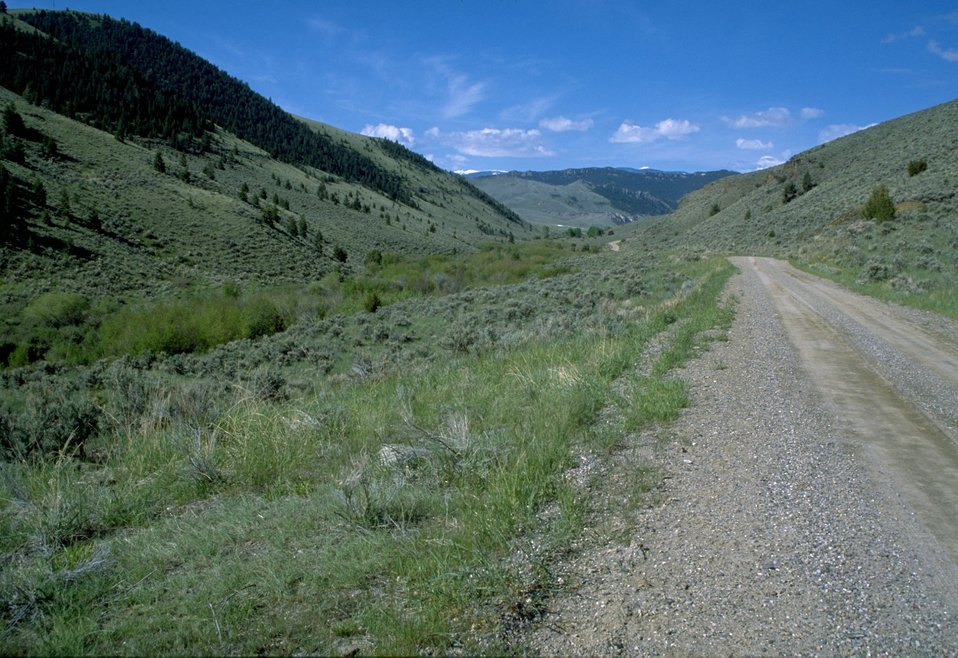 Green hillside and sagebrush along a road in the Pipestone Hills