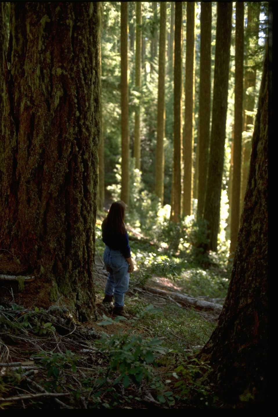 Old growth forest in the Glendale Resource Area.