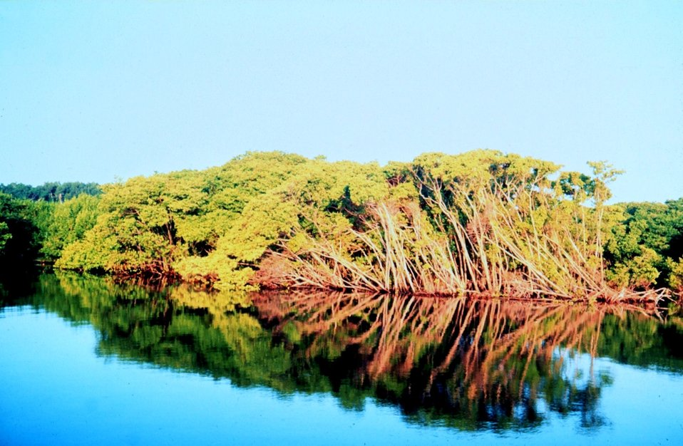 Mangroves along waterway in Palm Beach County