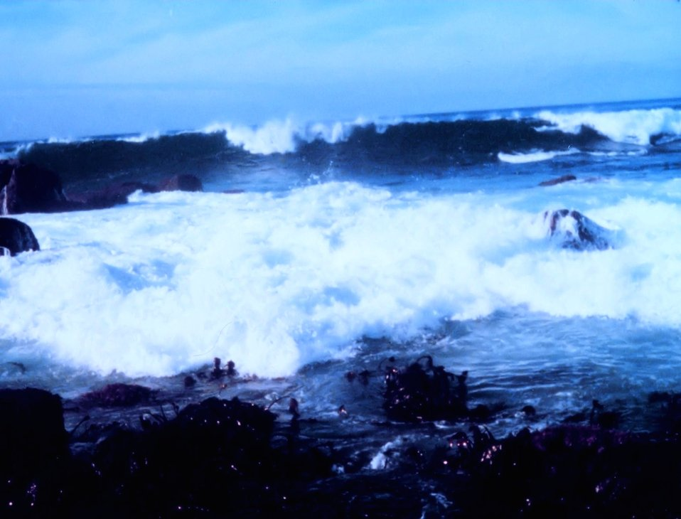 Surf breaking over the rocks and kelpbeds at Point Pinos, Monterey area.